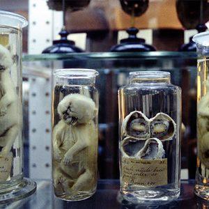 Anatomy Pathology Institute
