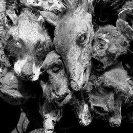 Voodoo ©Giovanni Piesco